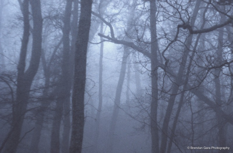 Littledale Woods